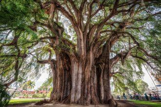 Arbor awe