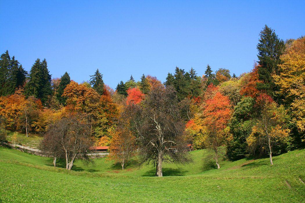 Foliage tour